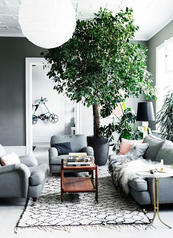 Kasvillisuus kodissa